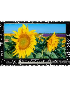 ტელევიზორი Sony KD55XF8096BR2